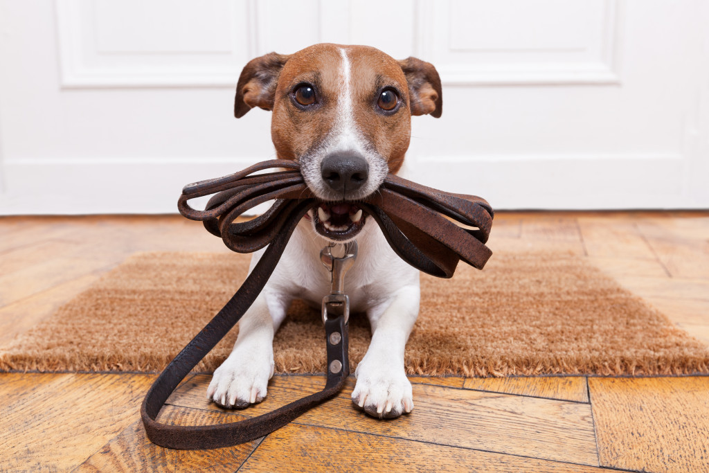 Puppy biting leash